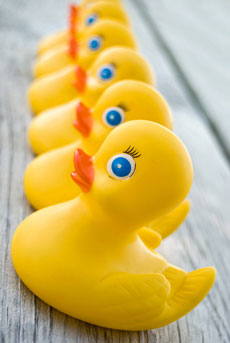 Get your ducks in an evenly distributed row (c) Shutterstock
